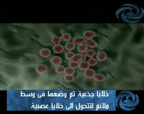 الخلايا الجذعية الجنينية